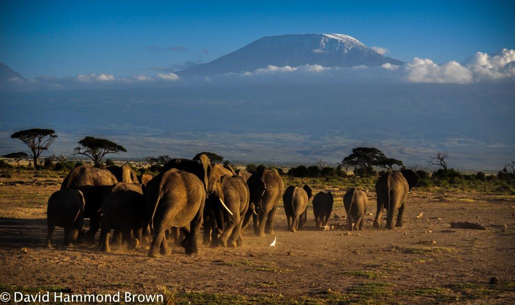 Kenya Safaris-Tanzania wildlife safaris -Botswana safaris-World Africa safari tour-expeditions adventures and safaris-africa safaris namibia - south africa safaris