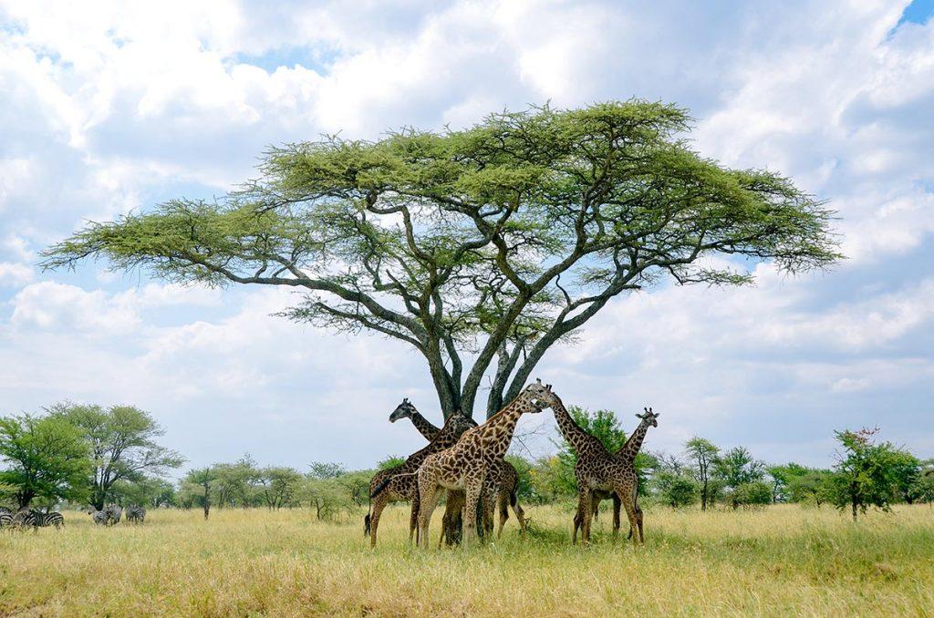 Tanzania 4 Day safari, 4 Day Safari Package & Price, 4 Day Safari