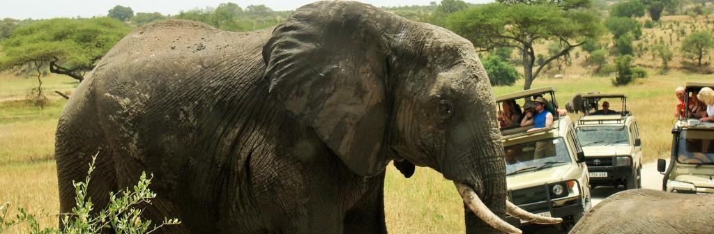 Tanzania 4 Day safari, Tanzania 4 Day safari, 4 Day Safari Package & Price, 4 Day Safari