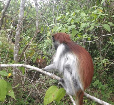 kenya safaris-Zanzibar-Wildlife