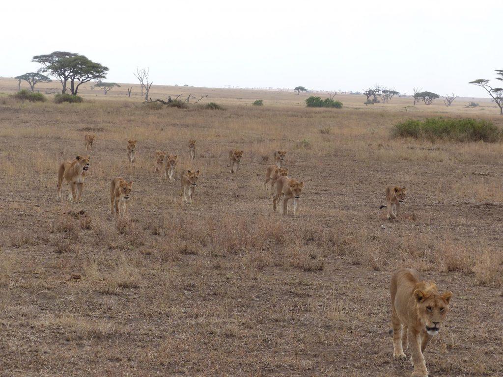 7 Day Tanzania Safari, Tanzania Safari