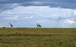 Kenya Classic Safaris