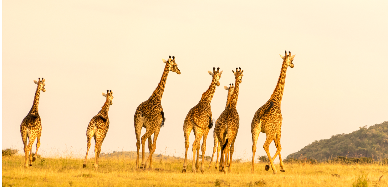 World Expeditions- Africa safari tour-expeditions adventures and safaris-Kenya Safaris
