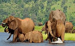 Victoria Falls to Chobe