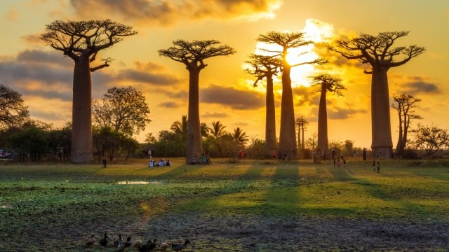 Madagascar Baobab MADAGARCAR EXPEDITION -21 DAYS