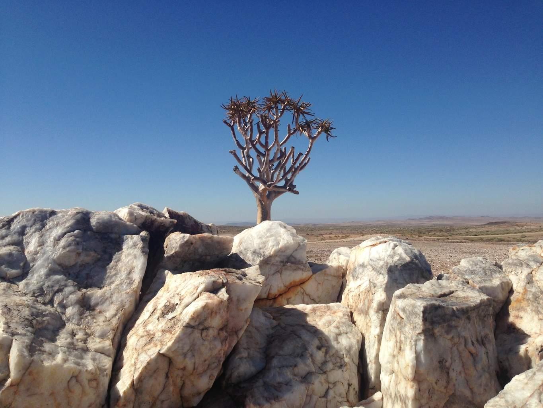 Namibia-Namib Desert-El Mundo Safaris