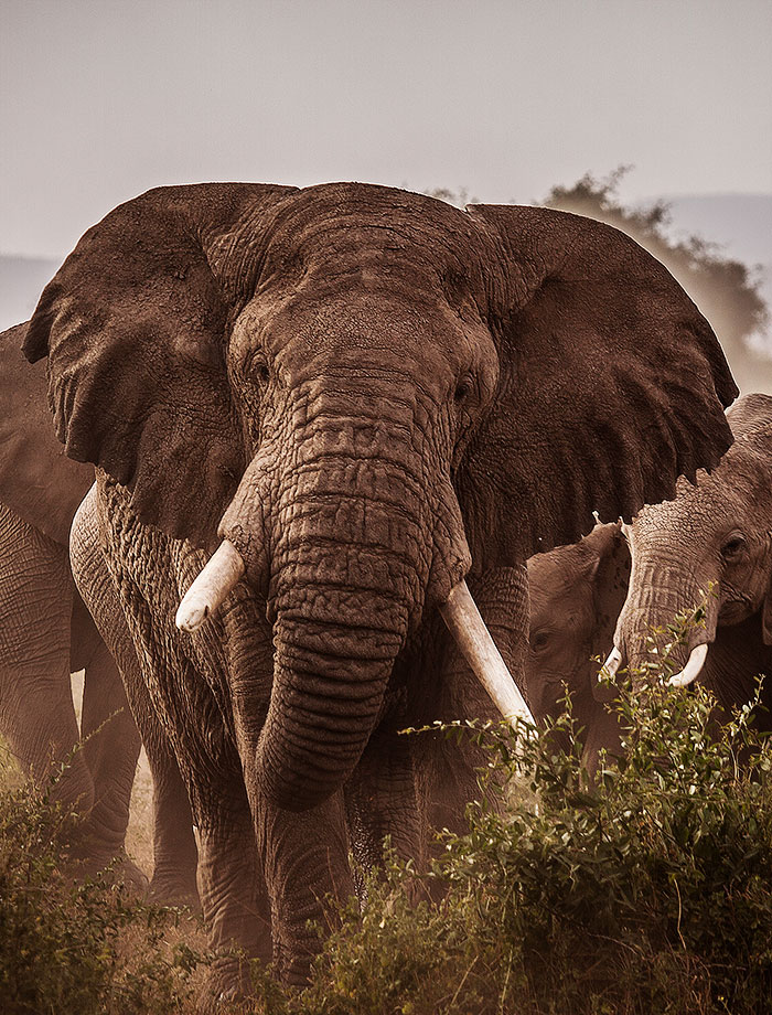 East Africa Fly Over Safari