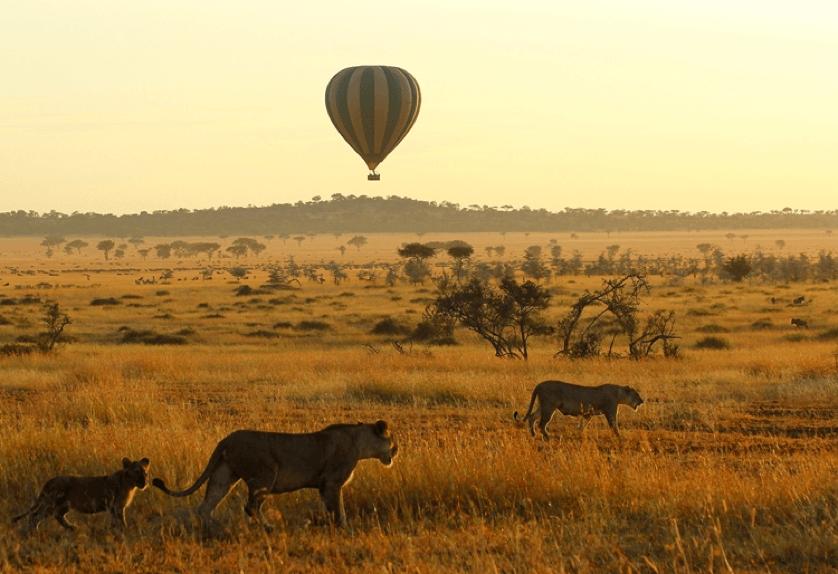 wildlife-safari-zanzibar, East Africa Fly Over Luxury Safari