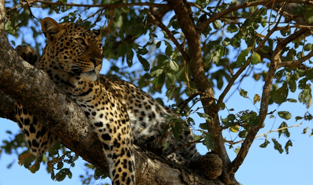 Fly Over Across Africa Luxury Safari,