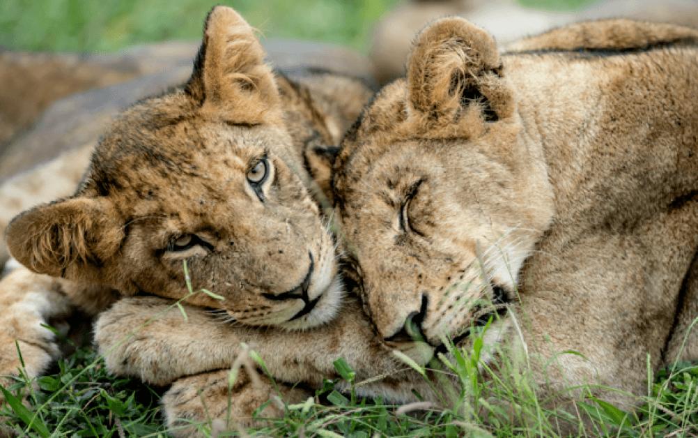 Fly Over Tanzania Luxury Safari
