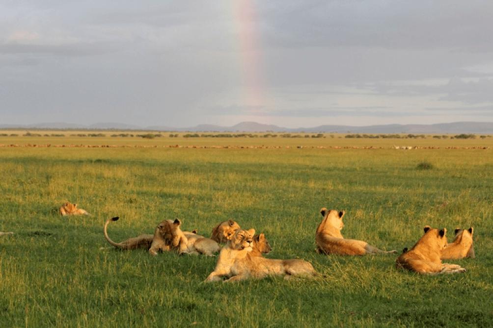 Fly Over Across Africa Luxury Safari, Southern Tanzania Selous, Mikumi & Ruaha 10 day