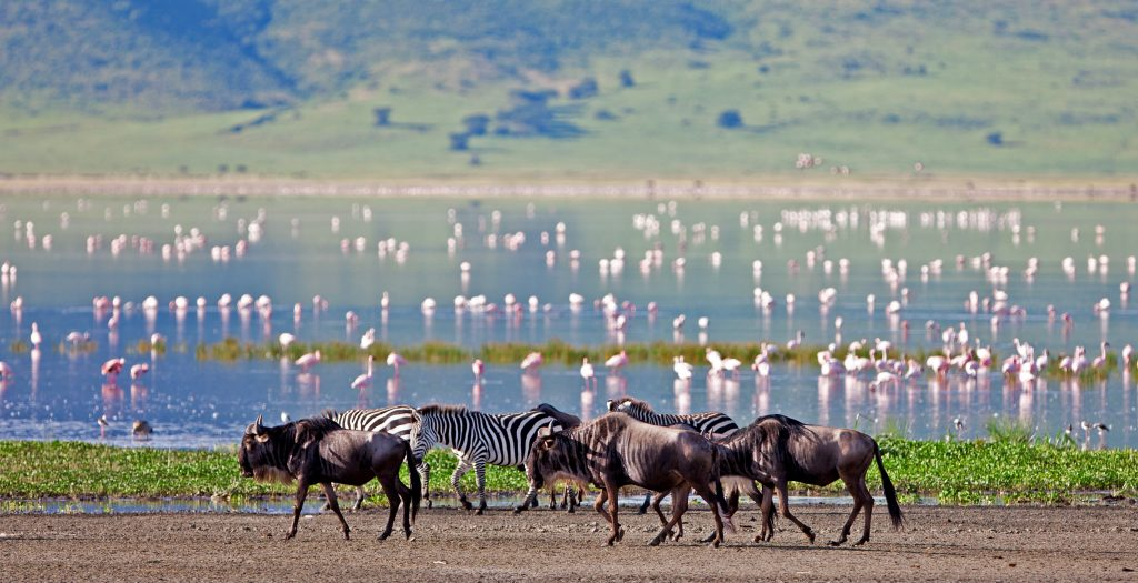Travel with Purpose, Tanzania Travel with Purpose Package