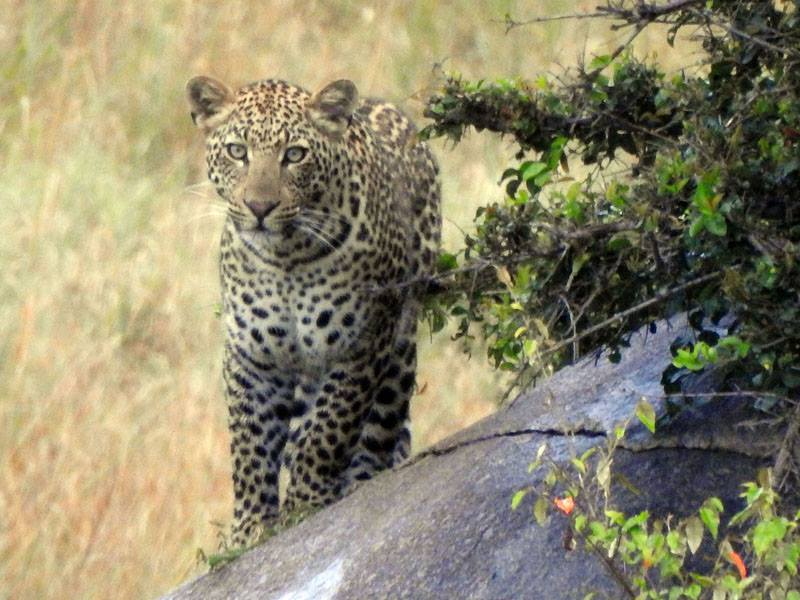 African Wildlife Safaris, wildlife parks