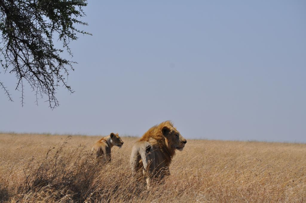 East Africa Green Season Safari