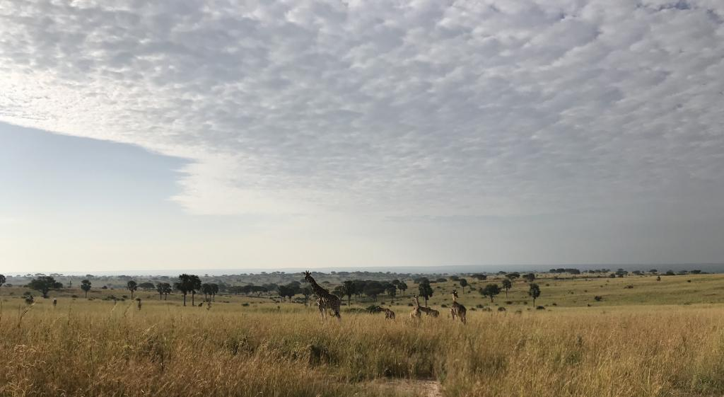 Explore Uganda Safari