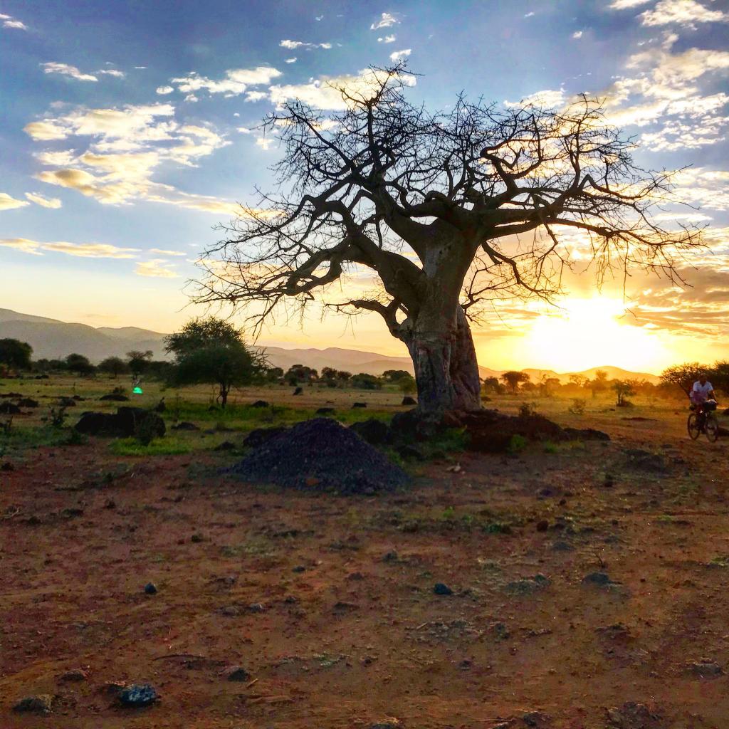 Bicycle-Africa-Baobab-Savannah-Kilimanjaro