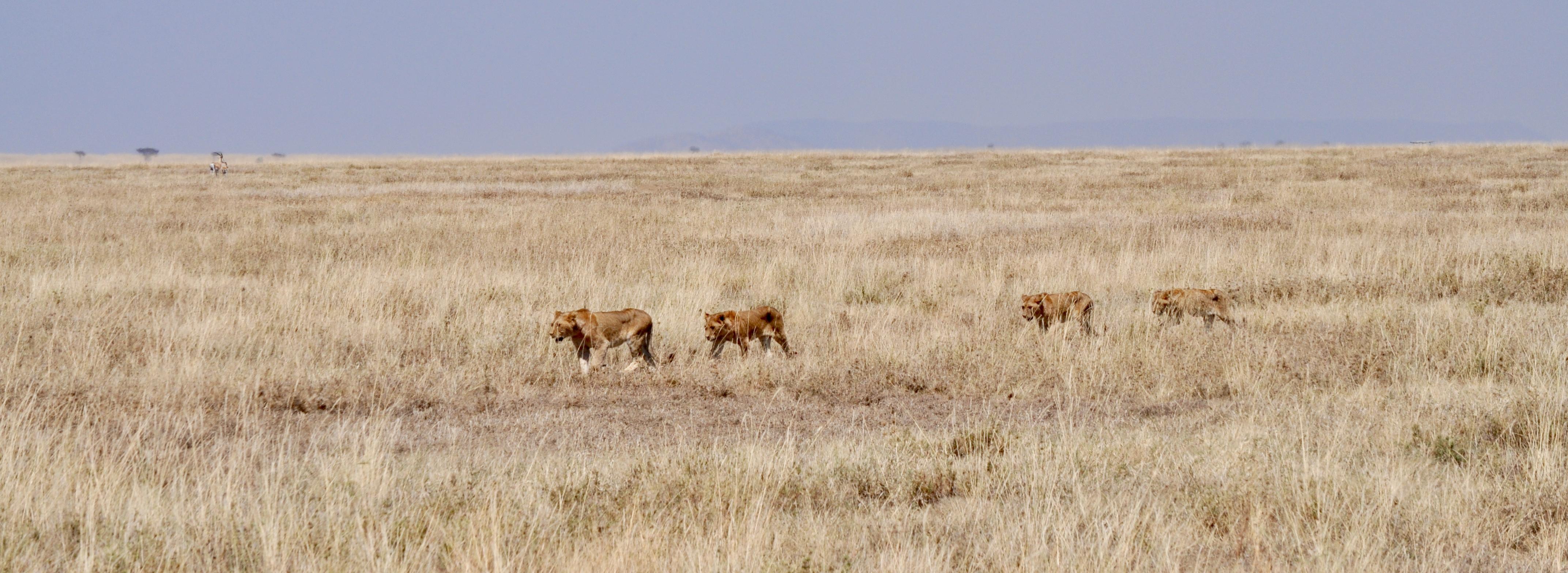 Southern Africa Safari-15 Days-El Mundo Safaris