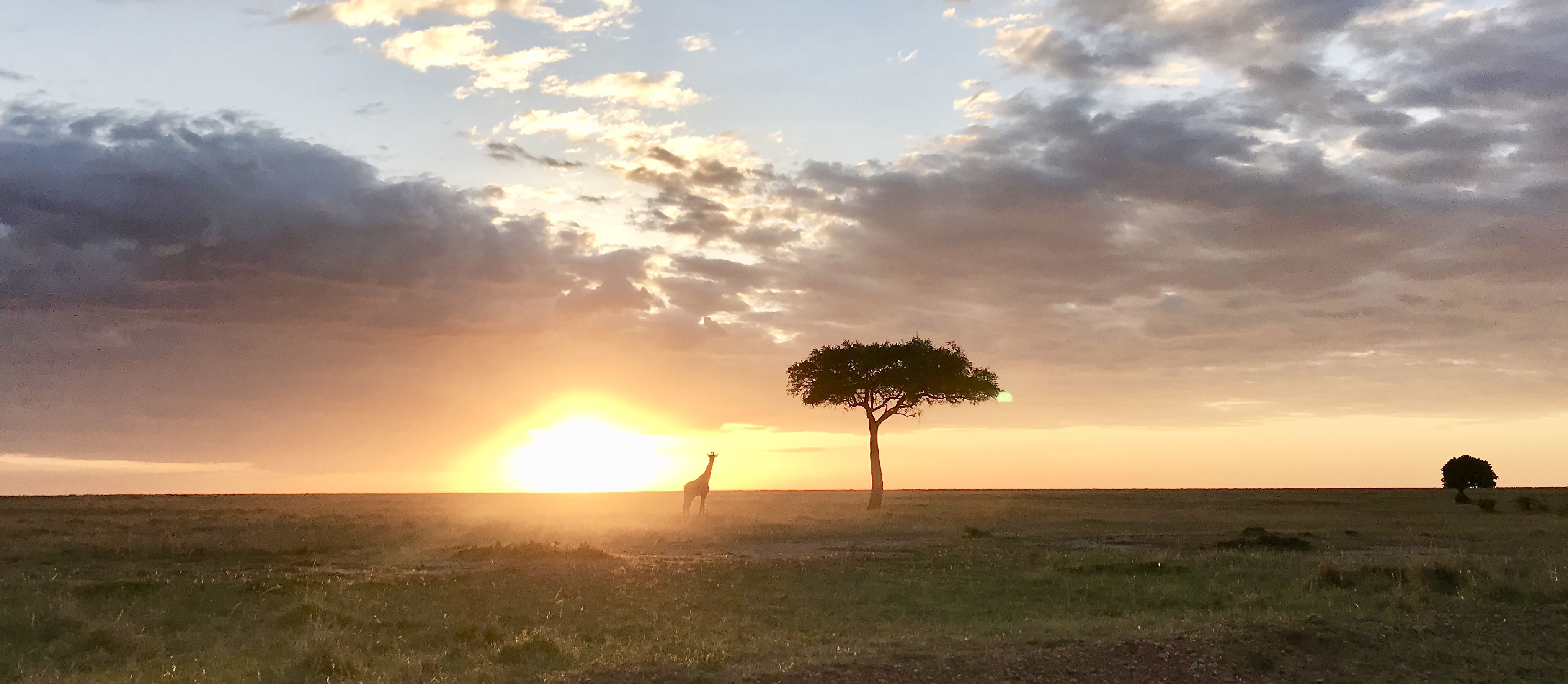 Giraffe, Acacia and Sun Set